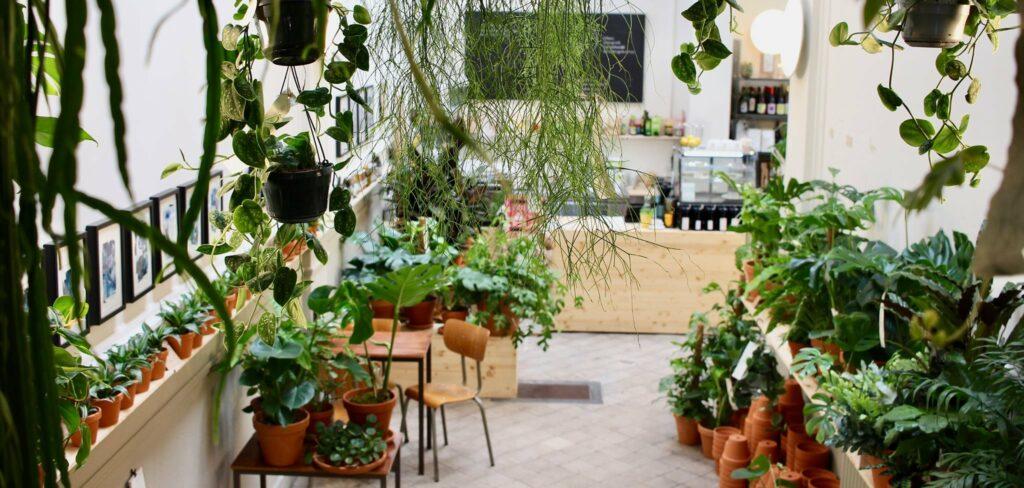 Bar + Plant in Borgerhub is partner van Klimplant